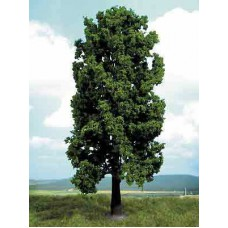 Bergahorn 35cm